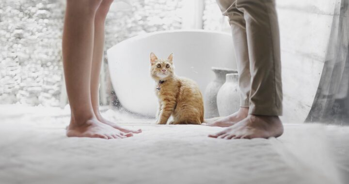 Who Gets the Pets After the Divorce